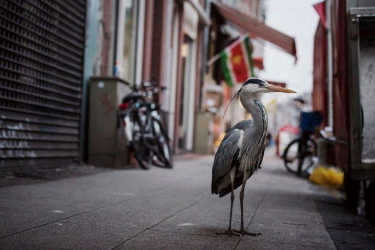 В опустевшие города пришли дикие животные
